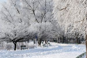 1122878_winter