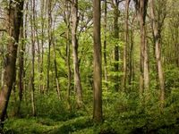1174083_forest